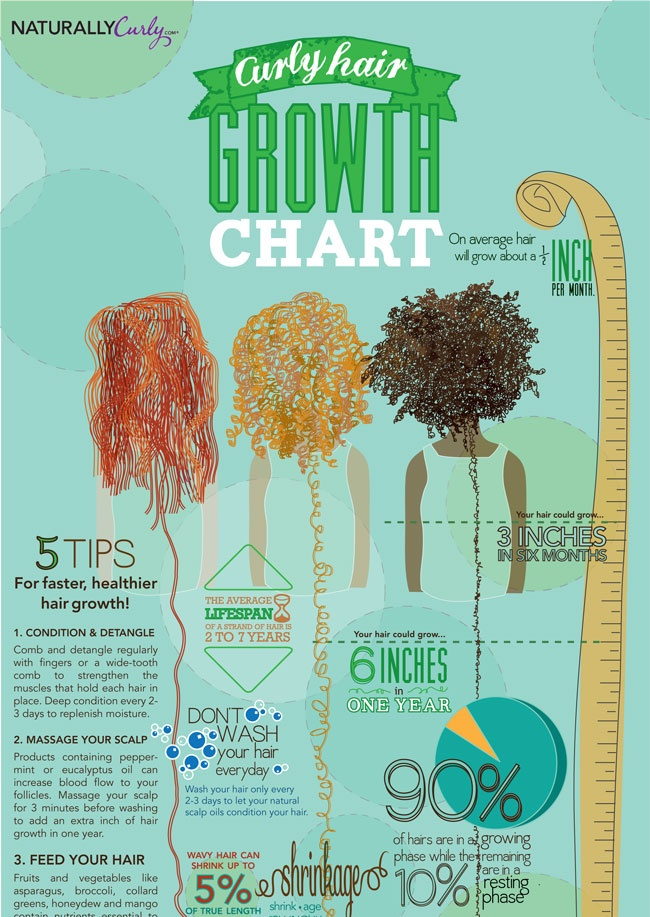 Curly Hair Growth Chart. How do you nourish your hair? What do you use?  I use Natures Hair Butters by BareIndulgence.net. It has Shea Butter, Coconut Oil, Cocoa Butter, Olive Oil, Grape Seed Oil, Castor Oil, Jojoba Oil, Glycerin and Essential  Fragrance Oils. Nothing more! Click Here and see for yourself!