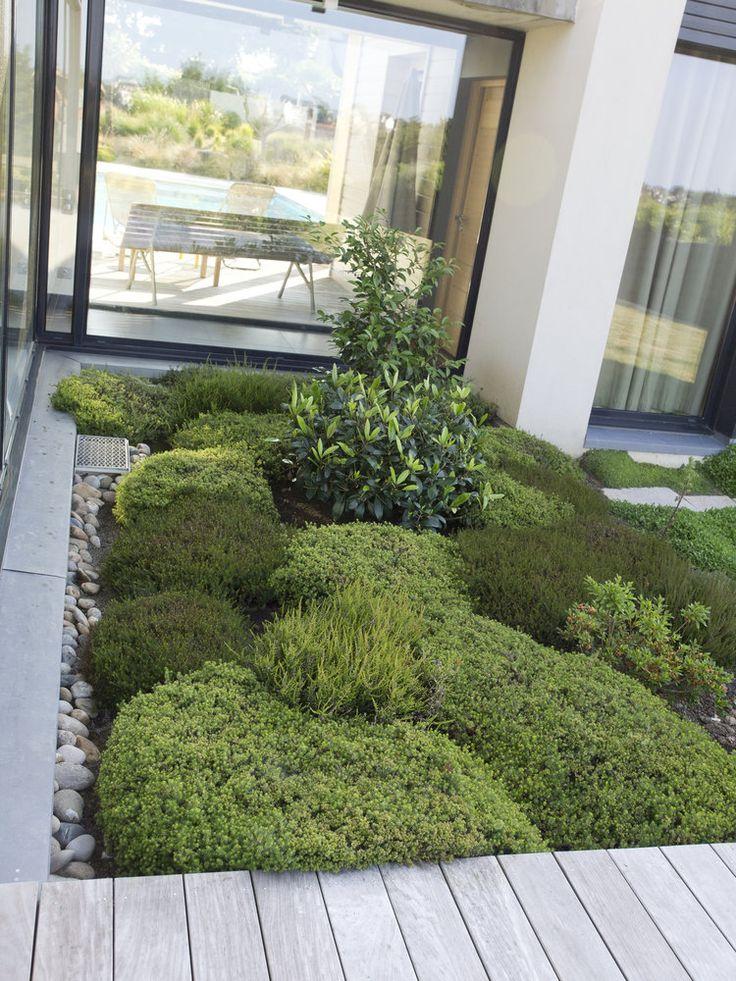 Les 108 meilleures images propos de jardin sec et de for Jardin expose nord