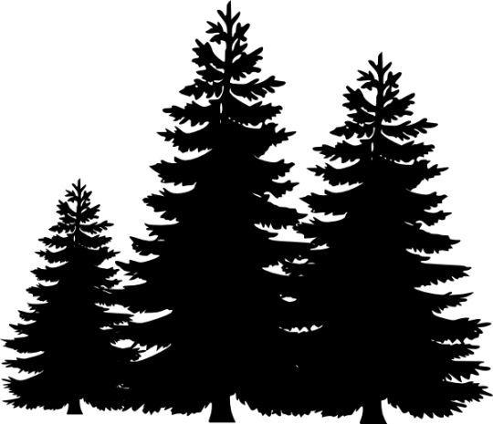 pine tree, tree silhouette clipart