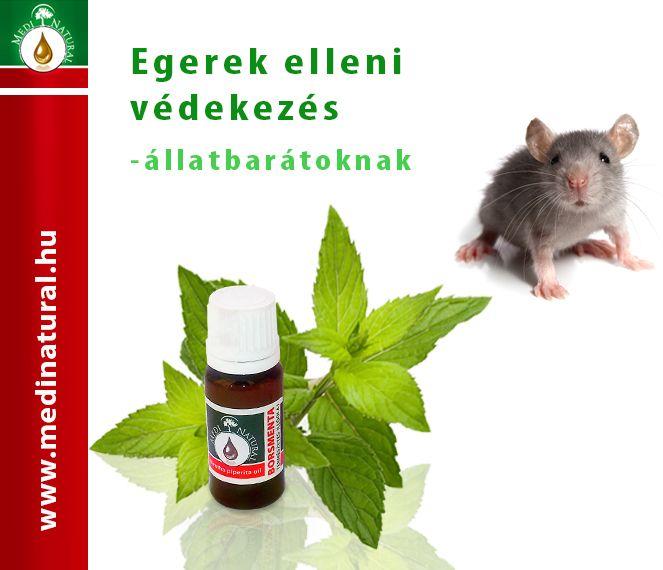 Borsmenta illóolaj-Egerek elleni védekezés állatbarátoknak