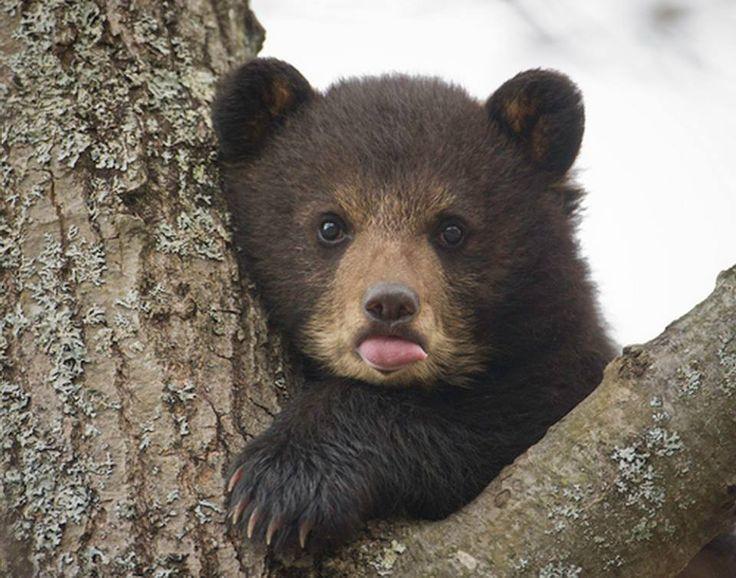 extra cute baby bear !!!!!!!!!!! | ☮ Born to be free ...