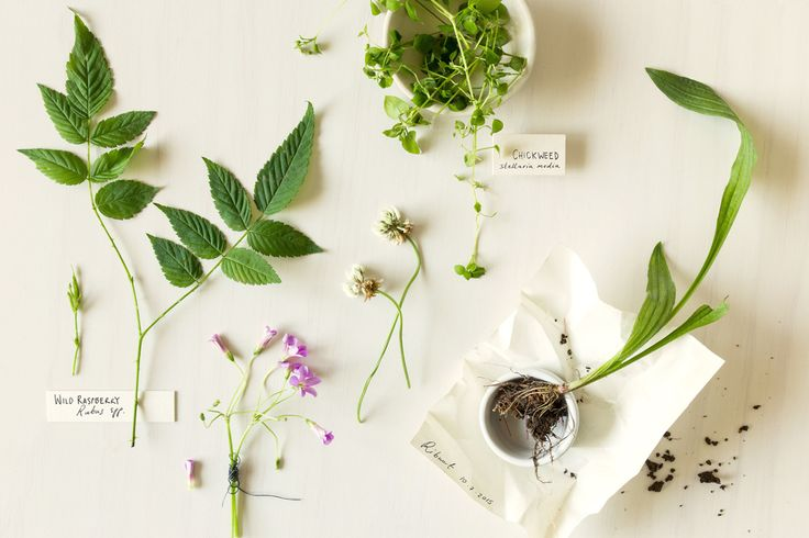 Wild-crafting and Herb crafting Still Life by Karina Sharpe