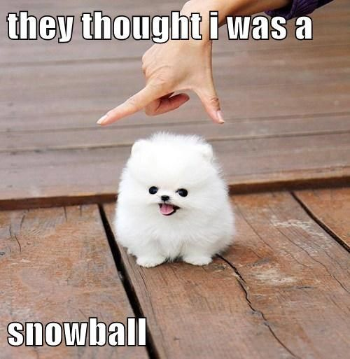They Thought I Was A Snowball,  Click the link to view today's funniest pictures!