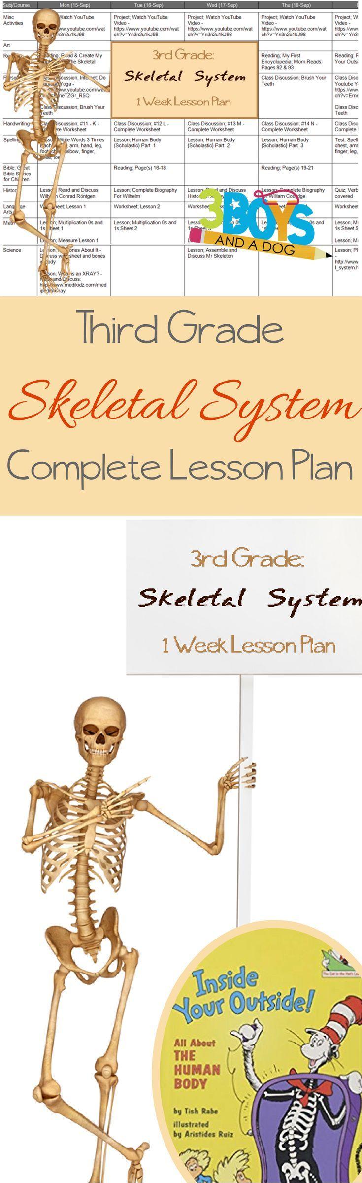 Unit study colors preschool - Learn The Skeletal System Grade Three Unit Study