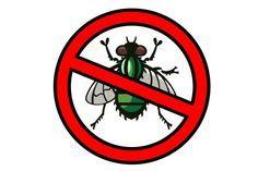 Nada más molesto que las moscas en verano, visitantes de lugares de comidas y restaurantes. Aquí te daremos algunos trucos y remedios caseros para ahuyentarlas.