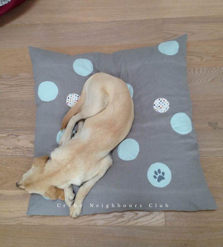 57 besten Nähen für Tiere Bilder auf Pinterest | Für hunde ...