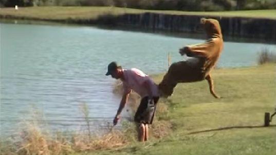 Funny Kangaroo Prank: Watch Remi Gaillard's Full Prank Video