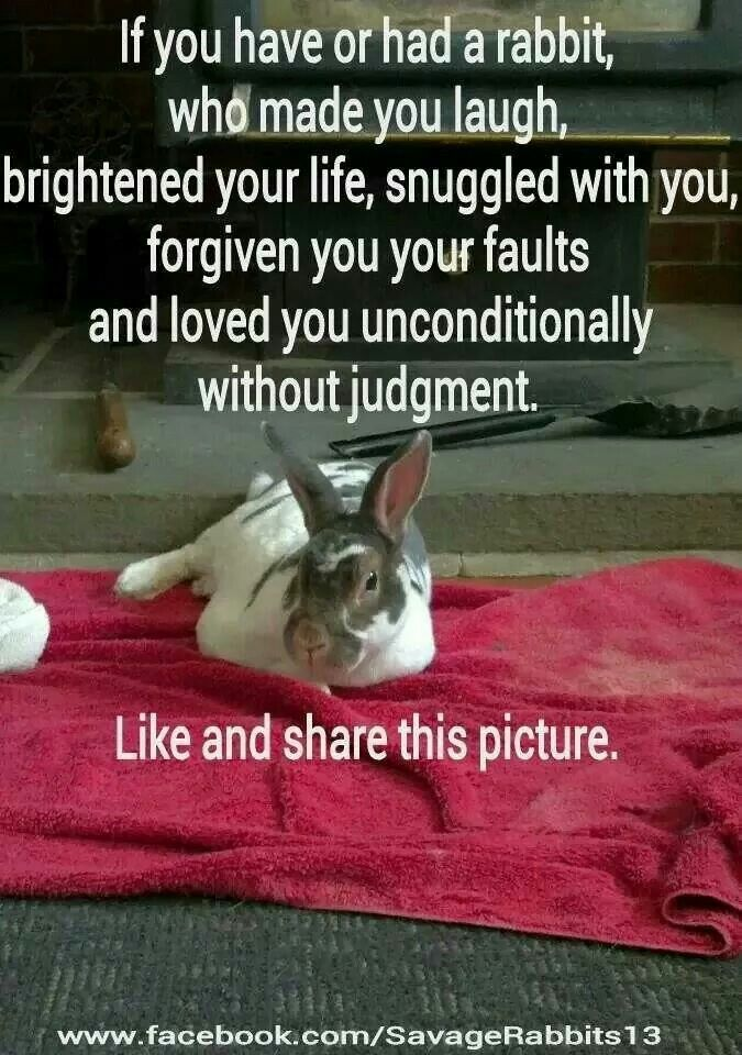 ❤ Gris, how I miss him!! Rabbits show us a glimpse of what God's unconditional love is like. ❤️
