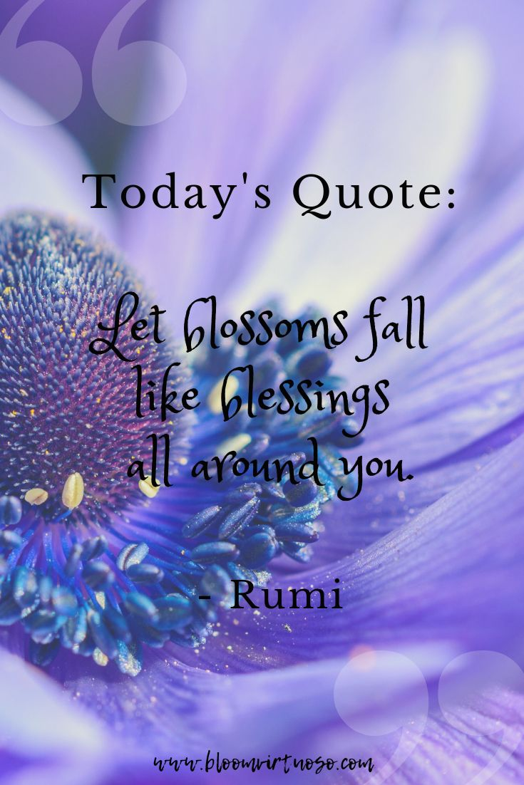 May You Be Blessed With Sweet Miracles Darling Flower Quotes Inspirational Flower Quotes Bloom Quotes