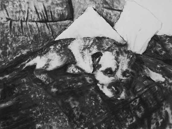 Border terrier print, black and white,Border terrier dog,charcoal drawing,Border terrier dog portrait,wall art print, border terrier drawing by OjsDogPaintings on Etsy #dogs #borderterriers #borders #art #charcoal
