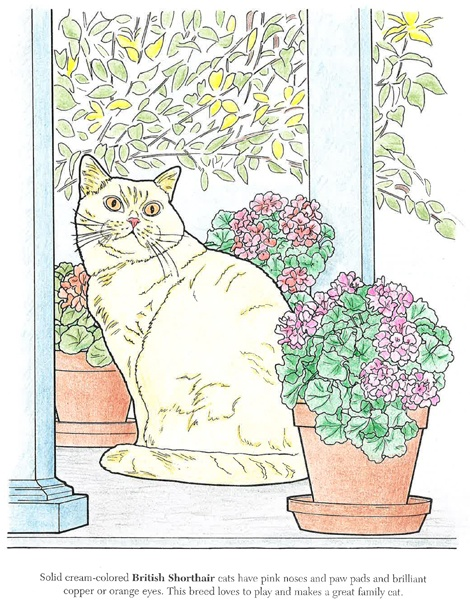 Donna McQueary (18+ division) from The Cat Lovers Coloring Book: http://store.doverpublications.com/0486462005.html