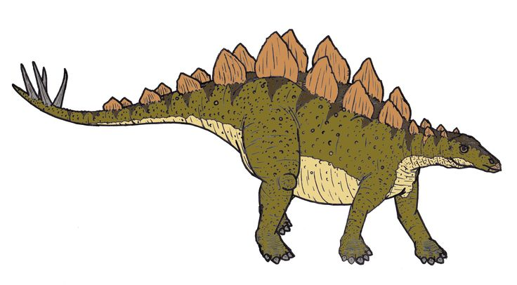 Descrizione Stegosaurus 0684.JPG