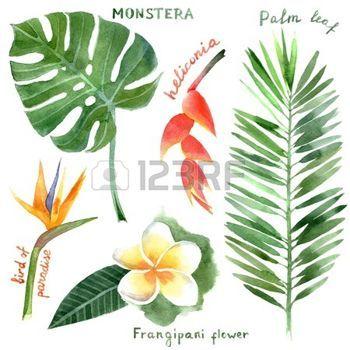 feuille de palmier: main aquarelle dessinée plantes tropicales