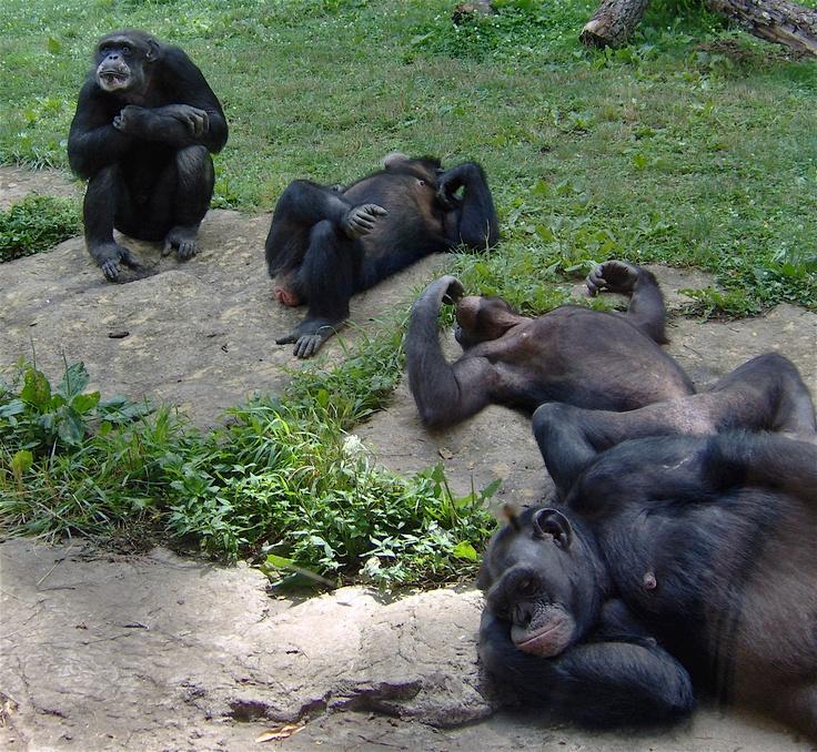 KC Zoo Primates