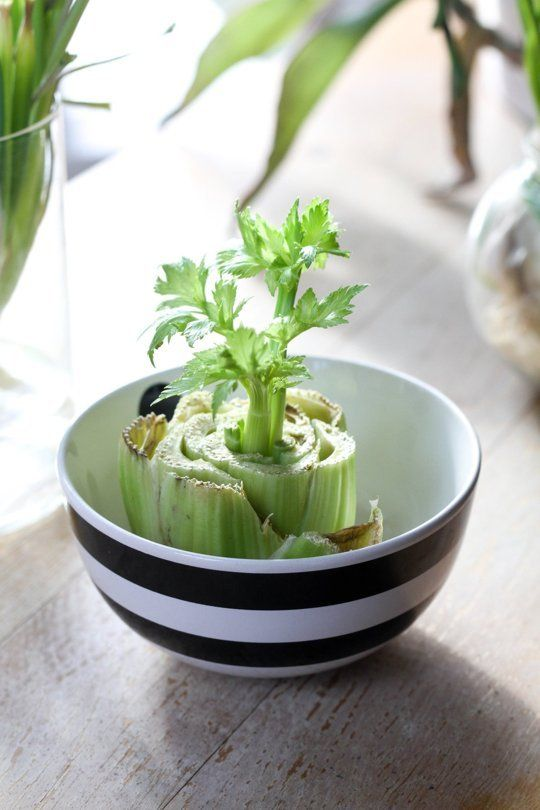 Extend Your Gardening Season Veggies & Herbs You Can Grow Indoors During the Winter Months