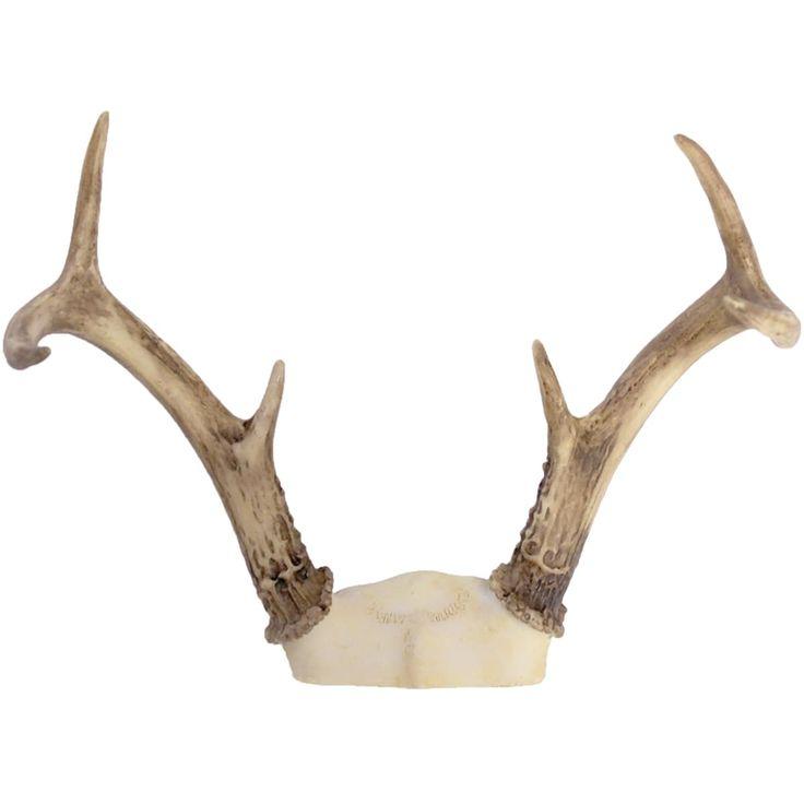 BCI Crafts Gathered Deer Antler Rack 3 Point-White Tail - white tail