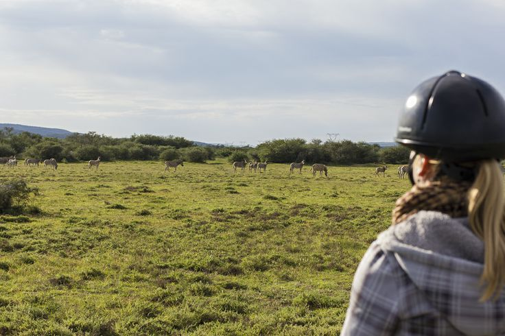 Horse riding in the game area in Addo Elephant National Park - Photography Rory Alexander