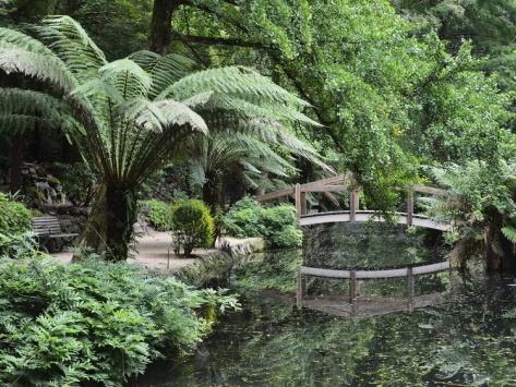 Alfred Nicholas Gardens, Dandenong Ranges National Park, Dandenong Ranges, Victoria, Australia