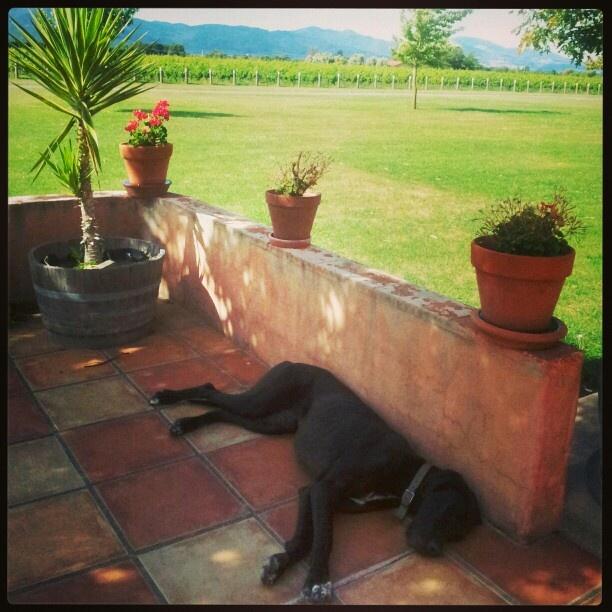 Luna having a shnooze