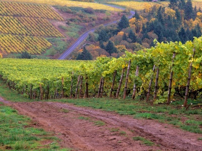 Willamette Valley, OR is the home to beautiful wine country, and a great place to find delicious Pinot Noir!