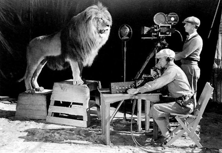 """Grabación del rugido del león de la MGM.  Es la 'mascota' emblema del estudio de cine estadounidense Metro-Goldwyn-Mayer (MGM). Este león conforma el elemento más característico del logotipo de MGM, circundado por una película de celuloide en que se inscribe el lema """"Ars Gratia Artis"""" (el arte por el arte)."""