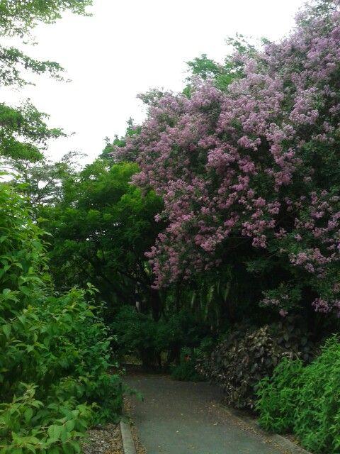 Botanical garden #Brisbane