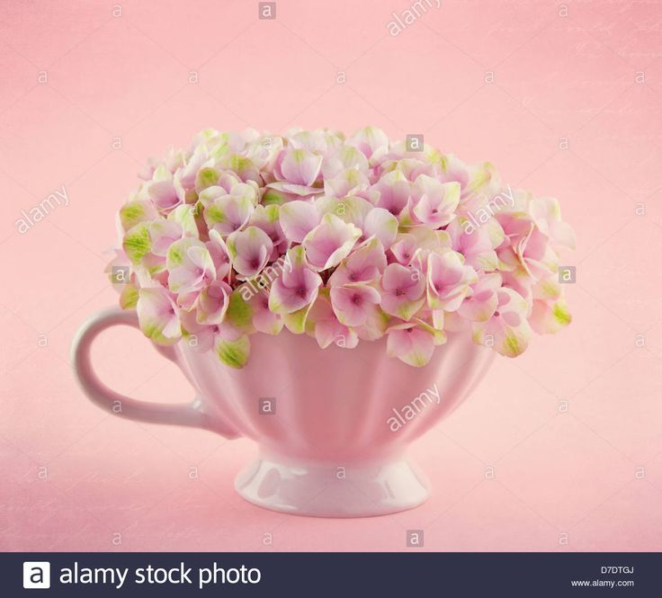 pink-hydrangea-flowers-in-a-shabby-chic-mug-on-pastel-vintage-background-D7DTGJ.jpg (1300×1175)
