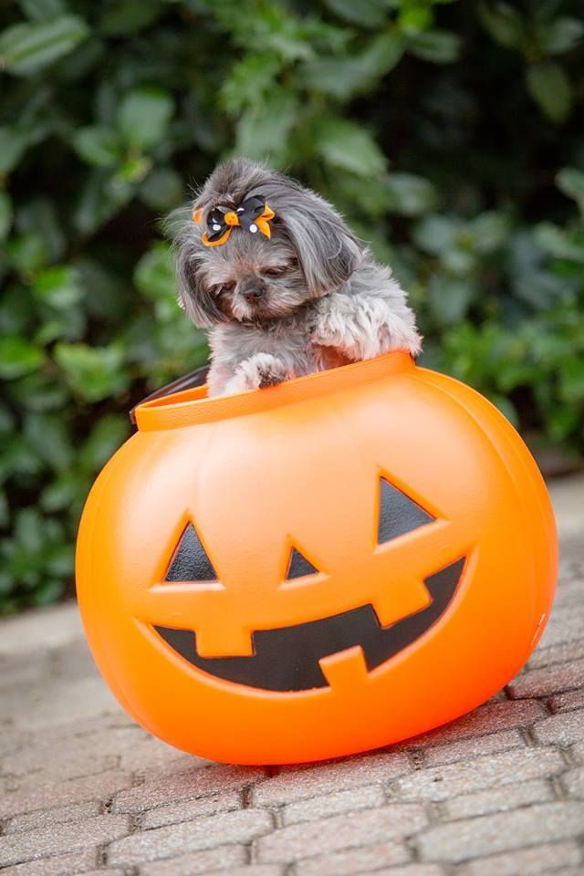 144 best :::Halloween Cats & Dogs::: images on Pinterest | Healthy ...