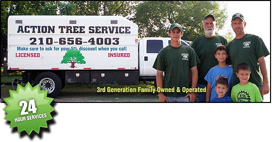 Tree Service in San Antonio