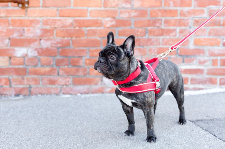 Check out the photos from Pink Frog Pet Products.