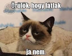 grumpy cat magyarul felirattal - Google-keresés