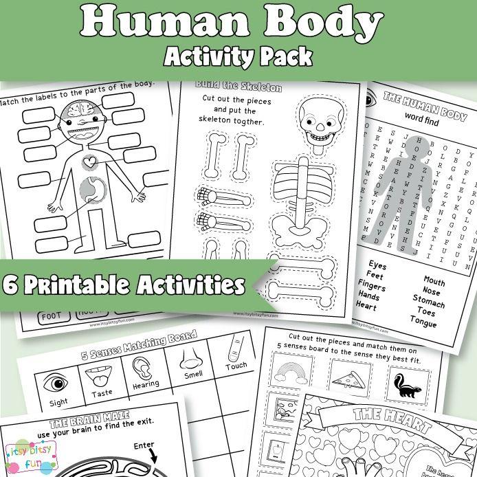Human Body Worksheets Human Body Worksheets Human Body Activities Body Preschool Free human body worksheets