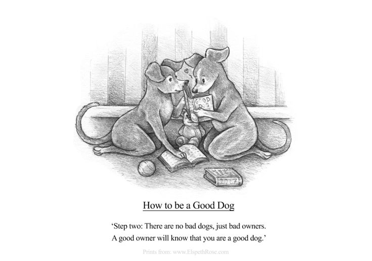 How to be a Good Dog Step Two by ElspethRose.com