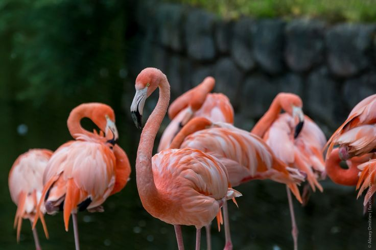 фламинго - Поиск в Google