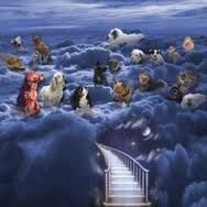 pinterest dogs in heaven pic - Google Search