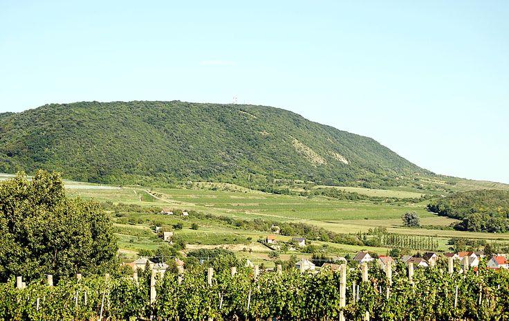Udvardy Judit  Móri dombok, hegyek Ezt a képet a móri Vén-hegyről sikerült lefényképeznem! Gyermekként jártam ott utoljára és teljesen megfeledkeztem erről a gyönyörű látványról. Rengeteg szőlősor, kezdődő szőlőfürtökkel, és a fák tele vannak gyümölcsökkel. Nem utolsó sorban a háttérben látható a  Vértes hegységünk, ahol számtalan szabadtéri programra van lehetőség.  Több kép Judittól: www.facebook.com/judit.udvardy