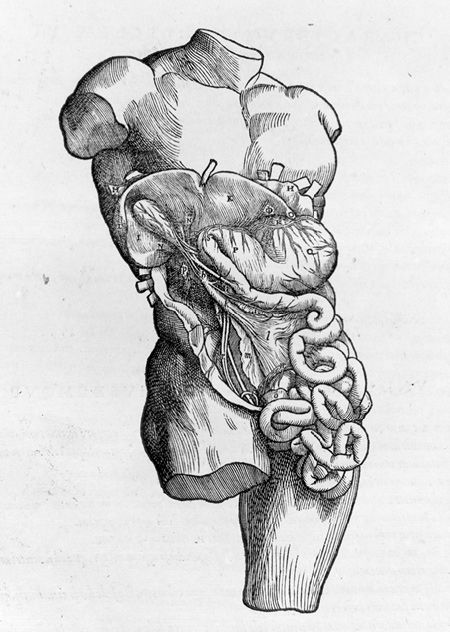 De humani corporis fabrica. Andrea Vesalius,  1543