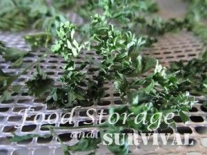 Drying Herbs in a Dehydrator: Parsley, Oregano, Basil
