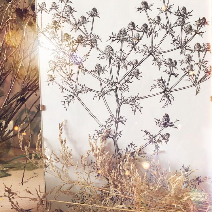 Botanical decor with printable eryngium!