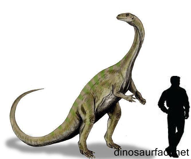 Triassic Animals List 57 best Triassic Perio...