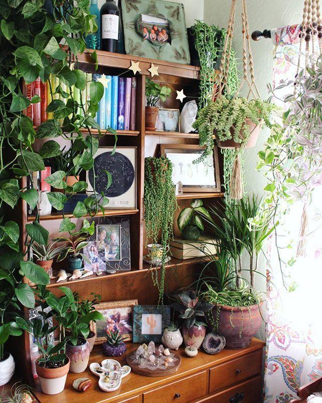 Plantas en escritorio y biblioteca