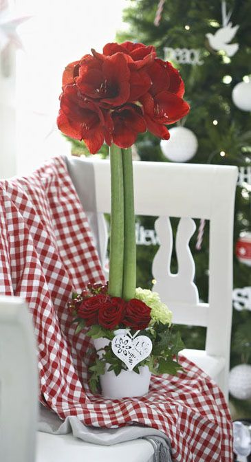 19 Best Christmas Flowers Images On Pinterest