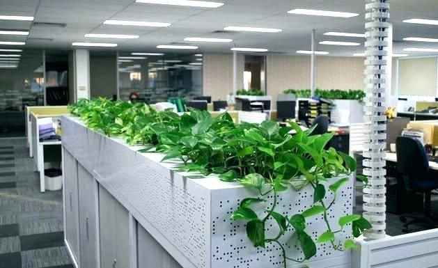 Image Result For Indoor Plants For Office With No Natural Light