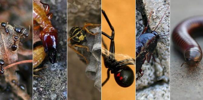 Pest Control Parsons Pest Management | Pest Control