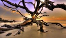 Jekyll Island, GAIslands Beach, Favorite Places, Vacations Spots, Beach Pics, Jekyll Islands, Driftwood Beach, Beach Wa, Beautiful Love, Beach Love