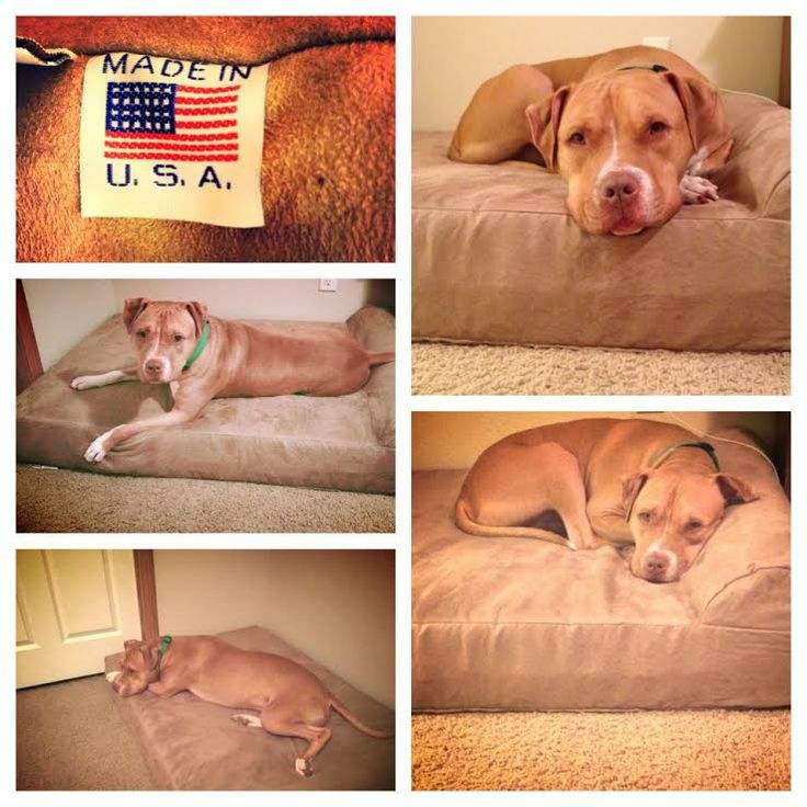 Best 25 torn acl in dogs ideas on pinterest dog steps for Best dog bed for large older dogs