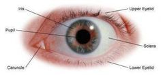 Improve Eyesight By Doing Simple Eye Exercises. Read more
