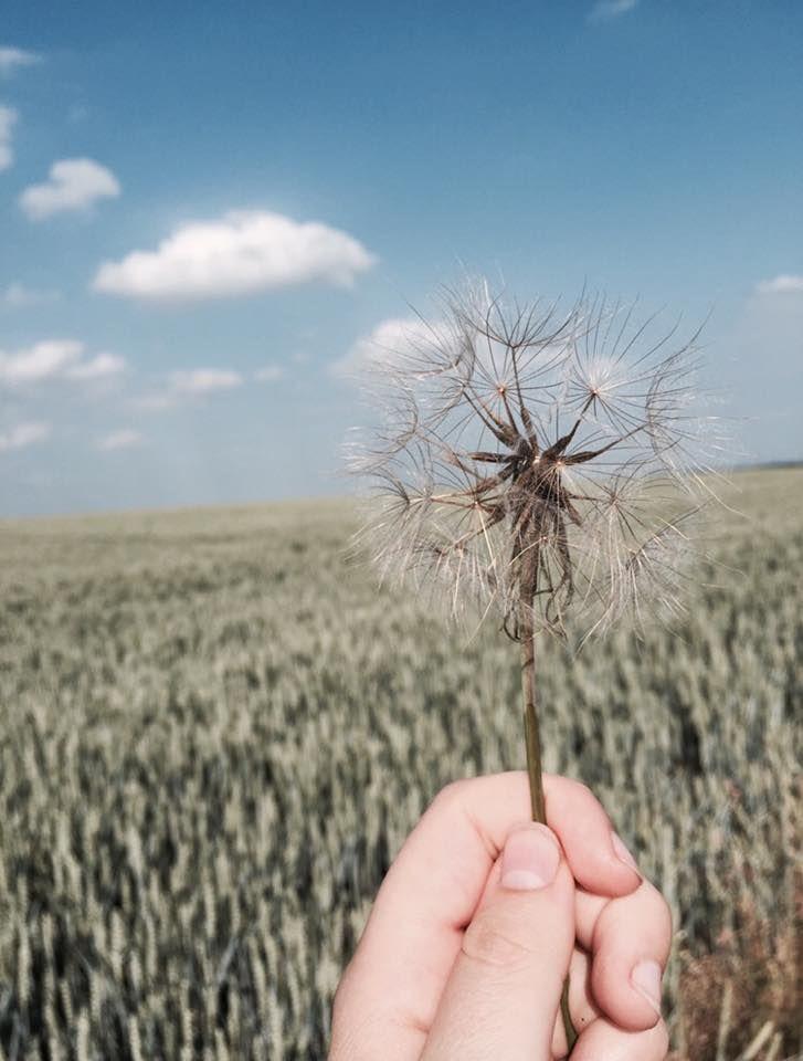 wish // flower // wind #wish #flower #wind #dream #run #field #nature #beautiful
