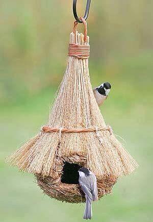 Kuş evi ana evi