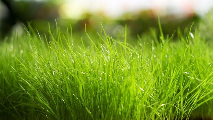 Fresh grass 1080p hd wallpaper nature grass wallpaper